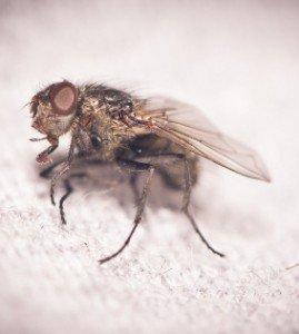 insectos arrastrantes y voladores