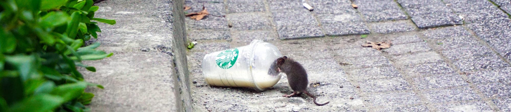 Control de ratas en Bizkaia