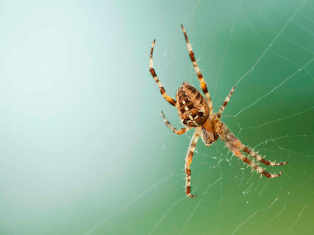 eliminar arañas