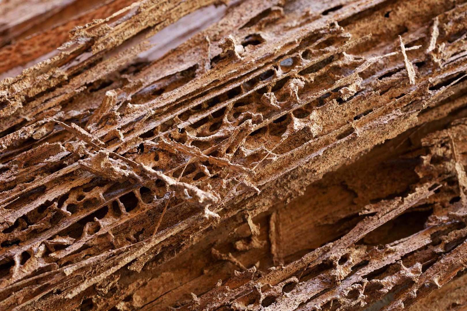 tratamientos eliminar termitas