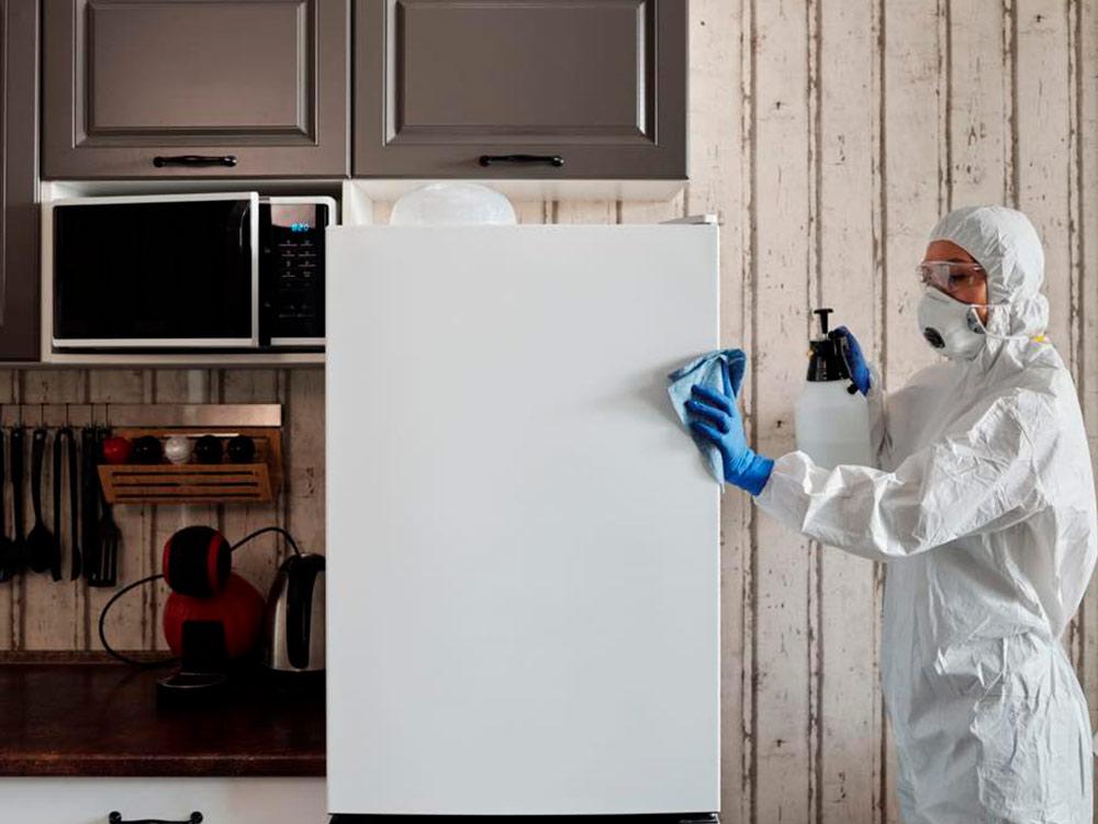 eliminar hormigas de cocinas